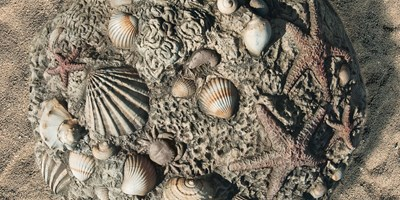 Fossil Digs Sea Shells